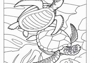 Sealife Coloring Pages Turtle Coloring Pages 371 Best Coloring Book Fish Sea Life Seashells