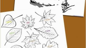 Shimmer & Shine Coloring Pages 114 Best Images About School Kids Stuff On Pinterest