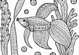 Siamese Fighting Fish Coloring Pages Betta & Fish Vector 75