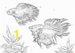 Siamese Fighting Fish Coloring Pages Betta Fish Coloring Pages Pinterest