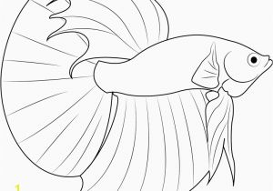 Siamese Fighting Fish Coloring Pages Realistic Fish Coloring Pages