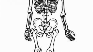 Skeleton Coloring Page for Kids Free Printable Skeleton Coloring Pages for Kids