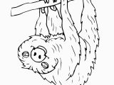 Sloth Coloring Pages for Kids Coloringpictureofasloth Google Search