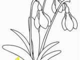 Snowdrop Coloring Pages 272 Best Coloring Pages Images