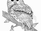 Snowy Owl Coloring Page Pin by Betty Mcclellan On Coloring Pages