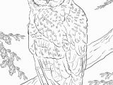 Snowy Owl Coloring Page Pin by Małgorzata Kitka On Coloring Pages Owls