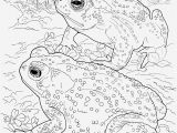 Sonoran Desert Coloring Pages 20 Awesome sonoran Desert Animals Coloring Pages