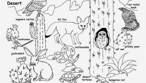 Sonoran Desert Coloring Pages sonoran Desert Animals Coloring Pages Awesome Wildlife Coloring