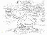 Southwest Coloring Pages the Desert tortoise is A Timid Reptile that Lives In Sandy Deserts