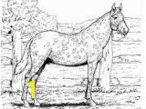 Spotted Horse Coloring Pages 371 Best Horse Lover Coloring Pages Images On Pinterest In 2018