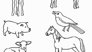 Spring Baby Animal Coloring Pages Match the Baby Animals to their Parents by Drawing Lines with