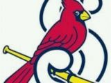 St Louis Cardinals Coloring Pages Springfield Cardinals
