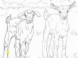 Stuffed Animal Coloring Pages Baby Goats Coloring Page
