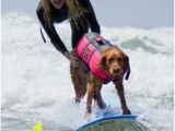 Surf Dog Wall Mural 30 Best Adaptive Surfing Images