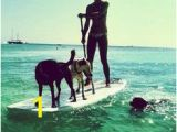 Surf Dog Wall Mural 36 Best Dogs Surfing & Stand Up Paddle Images