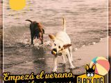 Surf Dog Wall Mural Black Dog Pet Shop and Services In Panama