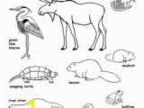 Swamp Animals Coloring Pages Benefits Of Wetlands Infographics News & Resources