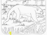 Swamp Animals Coloring Pages Florida State Symbols Coloring Pages