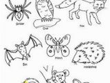 Swamp Animals Coloring Pages Nocturnal Animals Coloring Sheets