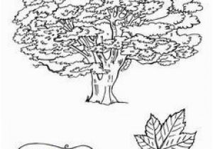 Sycamore Tree Coloring Page Sycamore Tree Coloring Page Fresh Sycamore Tree Coloring Page