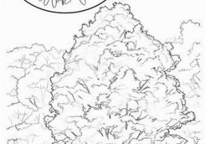 Tennessee State Tree Coloring Page 28 Idaho State Symbols Coloring Pages