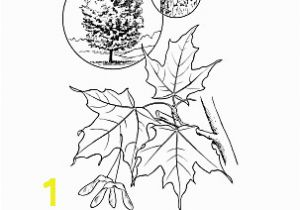 Tennessee State Tree Coloring Page New York Wordsearch Crossword Puzzle and More