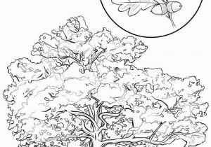 Tennessee State Tree Coloring Page Tennessee State Coloring Pages Inspirational Map Coloring Sheets