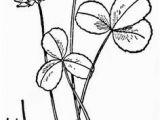 Texas Bluebonnet Coloring Page Coloring Flowers