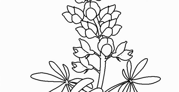 Texas Bluebonnet Coloring Page Coloring Flowers