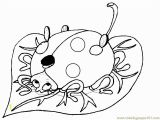 The Grouchy Ladybug Coloring Pages 15 Awesome Ladybug Coloring Page Stock