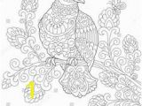The Pigeon Coloring Pages 316 Best Birds Patterned Colouring Pages Images