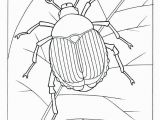 The Very Clumsy Click Beetle Coloring Pages Coloring Pages Insects