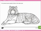 Tiger Outline Coloring Page Indian Tiger Colouring Page Teacher Made