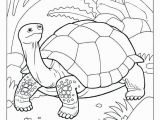 Tortoise and the Hare Coloring Page tortoise and the Hare Coloring Page New Unique Crayola Coloring