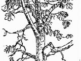 Tree Branch Coloring Page Pin by Janae Sumsion On Kira 4th