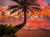 Tropical Sunset Wall Murals Tropical Sunset 🌅 by Crisp Artography