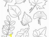 Types Of Leaves Coloring Pages 29 Best Leaf Coloring Images