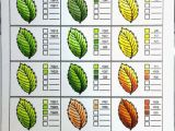 Types Of Leaves Coloring Pages Coloring Nature with Copics Leaves Crafting for Holidays