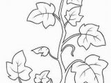 Types Of Leaves Coloring Pages Image Result for Coloring Page Vine and Branches