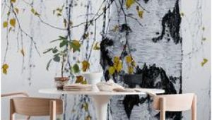 Urban Outfitters Birch Tree Wall Mural 12 Best Birch Tree Mural Images