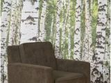 Urban Outfitters Birch Tree Wall Mural 42 Best Birch Trees Images
