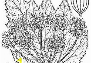 Volcano Coloring Book Pages 252 Best Fun Coloring Pages for Kids and Adults Images On Pinterest