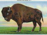 Wall Murals Buffalo Ny Buffalo New York Greetings From with A Buffalo Vintage