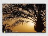 Wall Murals Palm Trees Palm Trees at Sunset Wall Art Design Sun Silhouette Print Nature Landscape Printable Digital Product N085