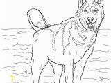 Washington Huskies Coloring Pages Husky Coloring Pages Siberian Husky Seska Pinterest