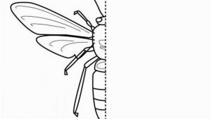 Wasp Coloring Pages for Kids 10 Free Coloring Pages Bug Symmetry Art for Kids Hub