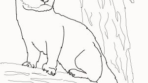 Weasel Coloring Pages Weasel Coloring Pages New Fisher Cat Coloring Page