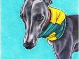 Whippet Coloring Pages 118 Best Whippet Greyhound Drawings Images On Pinterest