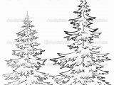 White Pine Tree Coloring Page Pine Tree Drawings Black and White