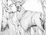 White Tailed Deer Coloring Page 4318 Best Deer Images